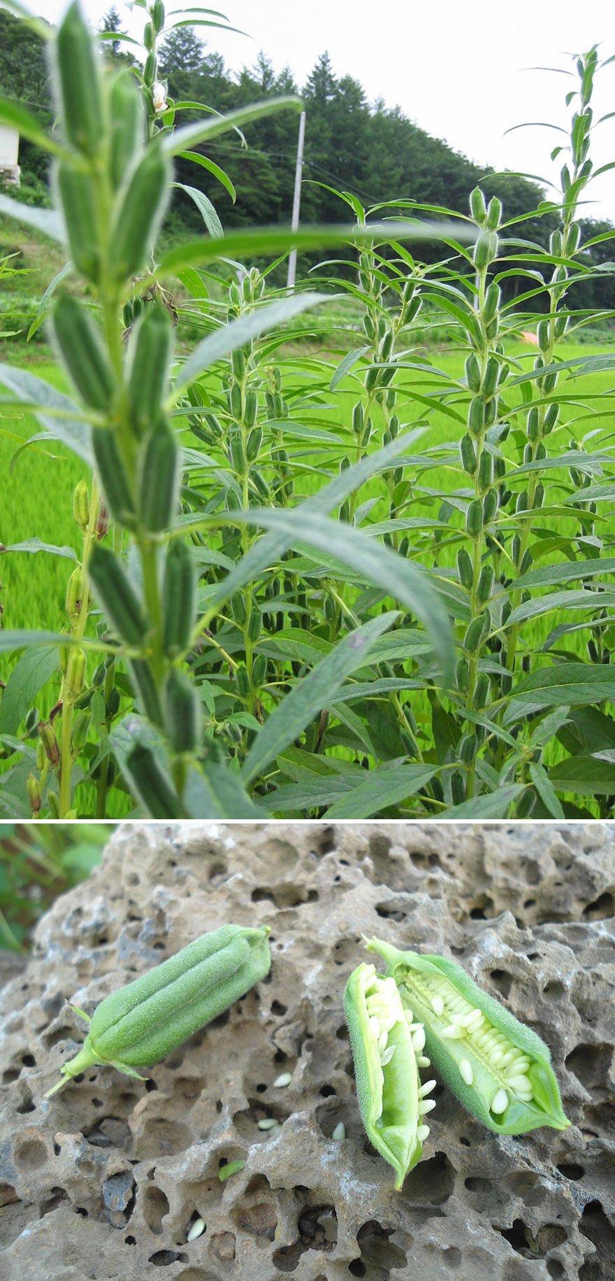 how-food-grow-11-58aab130aa28d__880
