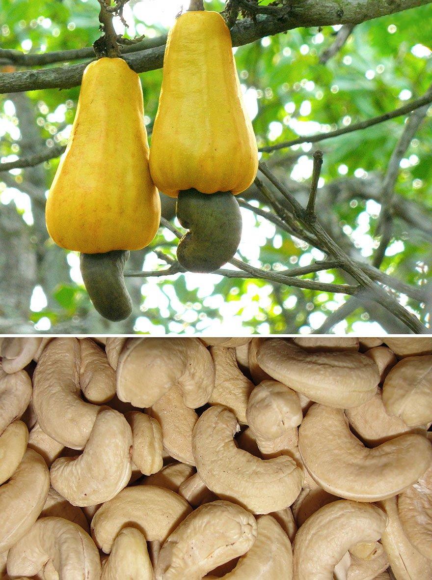 how-food-grow-14-58aab139a30a2__880