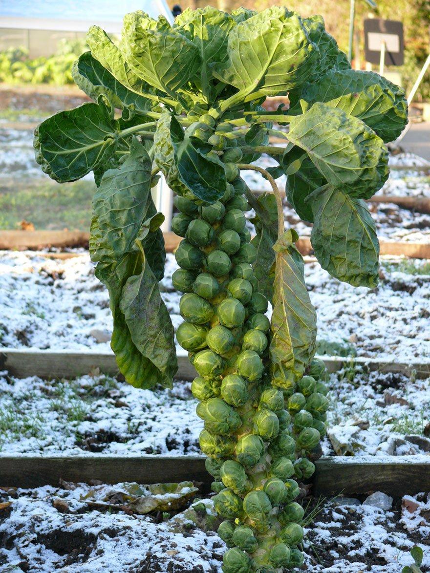 how-food-grow-18-58aab1445aac9__880