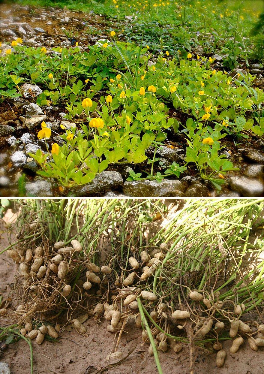 how-food-grow-2-58aab11840e44__880