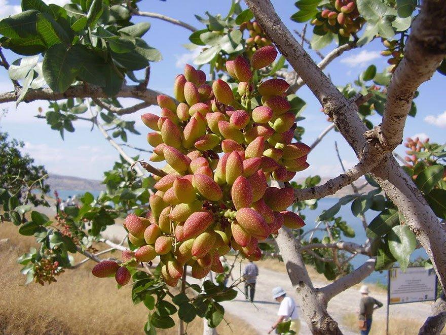 how-food-grow-21-58aab14b7fa7f__880