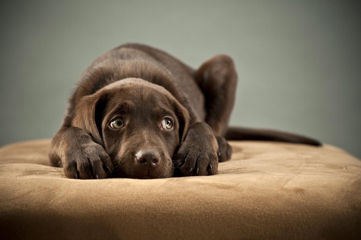 img 59fbbcefc951a.png?resize=1200,630 - 醫學研究證實:某些人類對狗的同情心,比對人還高