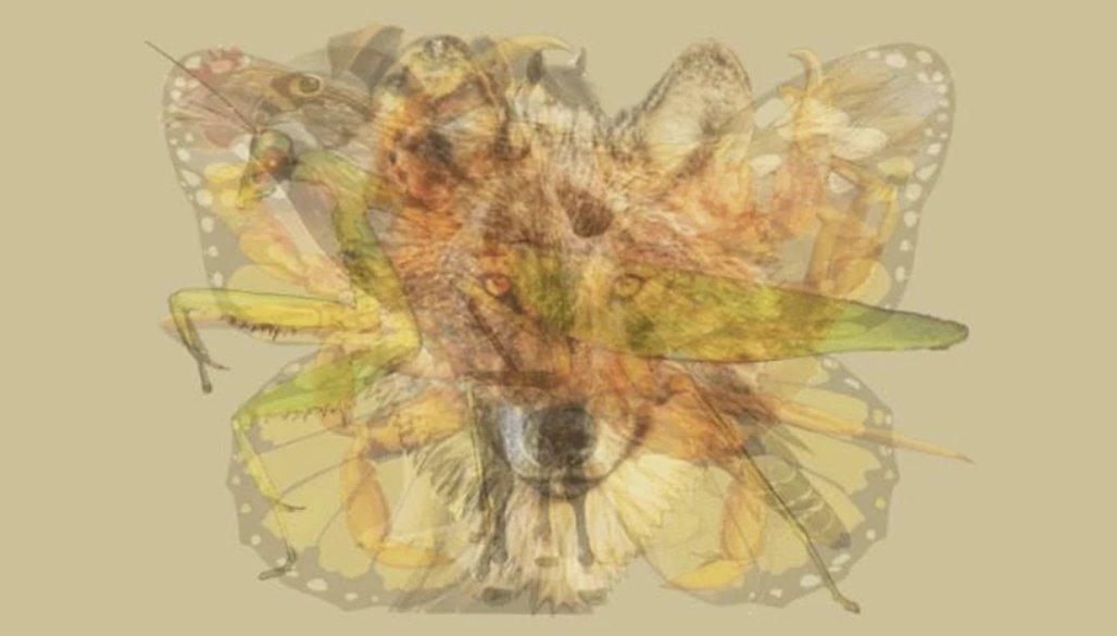 img 5a1f9166d5b07.png?resize=1200,630 - 【性格テスト】重なった画像の中で一番最初に目に付く動物は?