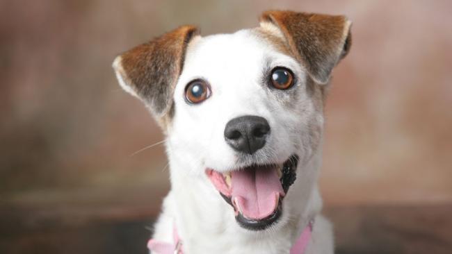 imgid73428768 jpg gallery - 5 tipos de cachorros que sofrem preconceito
