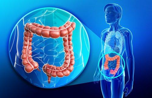 intestino-grueso