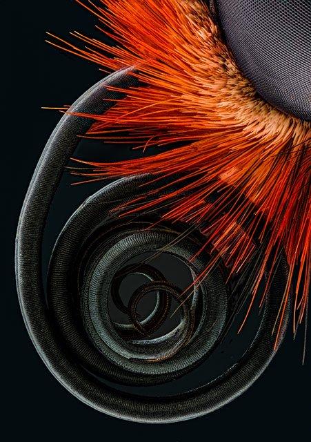 jochen-schroeder-butterfly-proboscis4