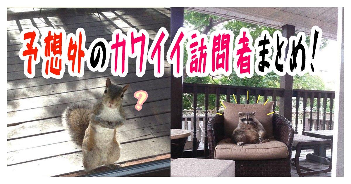 kawaiiokyakusan th.png?resize=1200,630 - 【写真】予想外のカワイイ訪問者まとめ!