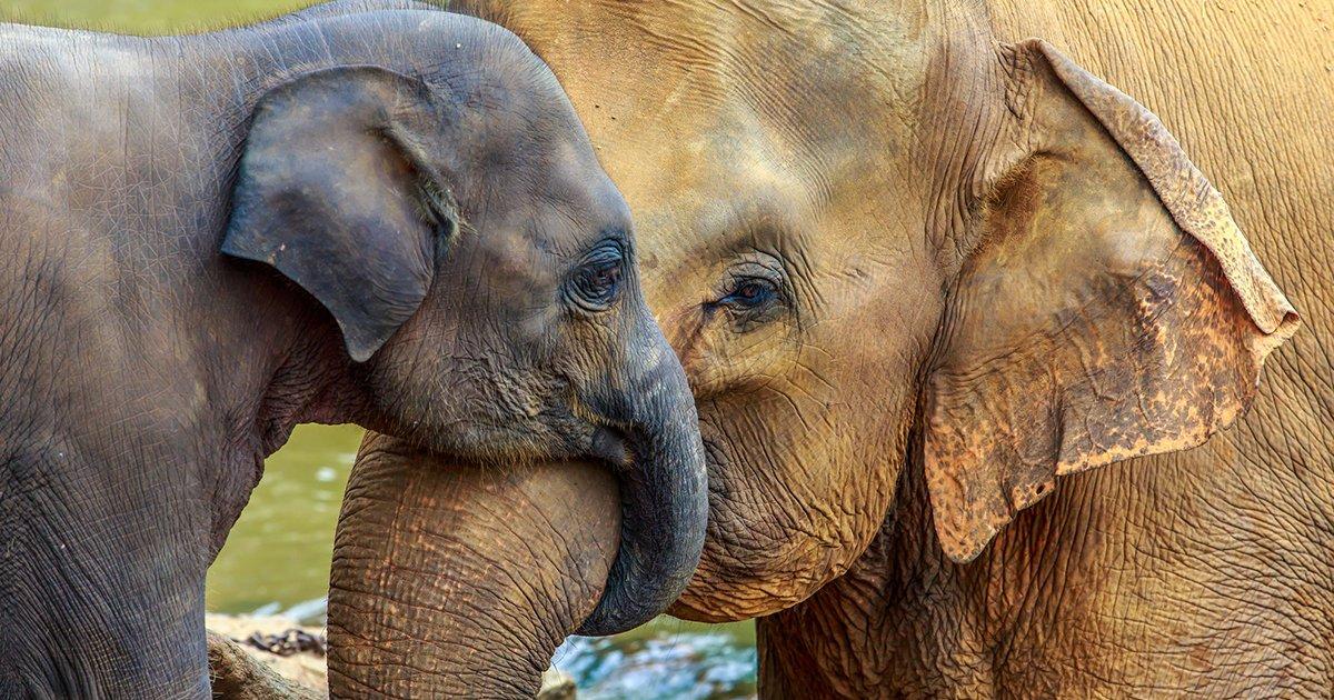 mainphoto_elephantban