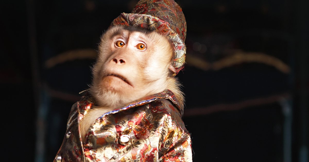 mainphoto italie - En Italie, la fin des animaux sauvages dans les cirques