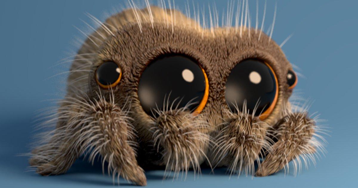 mainphoto lucas - [Vidéo] Voici Lucas, la plus mignonne des araignées