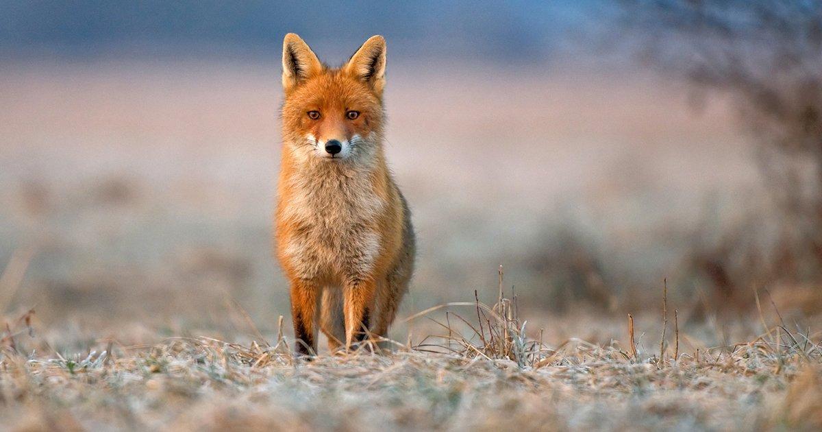 mainphoto ukanimal - Au Royaume-Uni, les animaux ne ressentent ni sentiments ni émotions dixit le Gouvernement