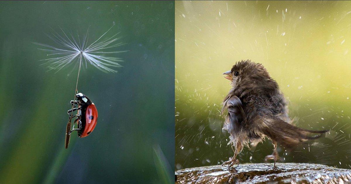 mainphoto ukrainien.jpeg?resize=1200,630 - [Photos] Il photographie les animaux comme personnes