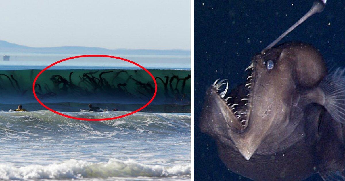 marfin.jpg?resize=412,232 - 12 imagens surpreendentes que te farão temer as águas do mar