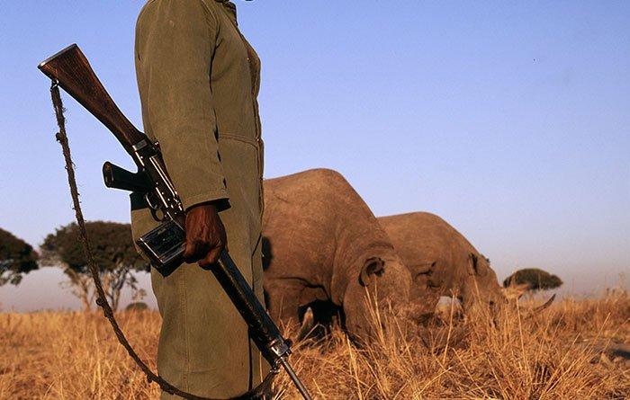national-park-shoots-people-protects-rhinos-kaziranga-13