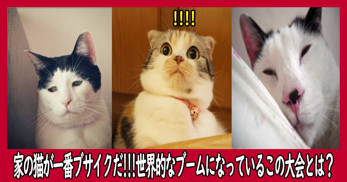 nekosyasin intro.png?resize=1200,630 - 家の猫が一番ブサイクだと主張!世界的なブームになっているこの大会とは?