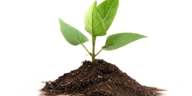 o-talk-to-a-plant-facebook