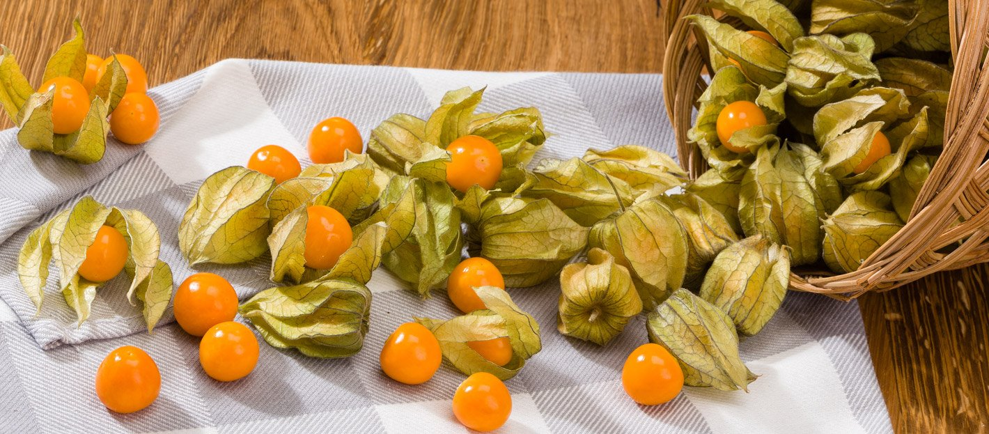 physalis 2a 1 - Golden Berry: a frutinha milagrosa