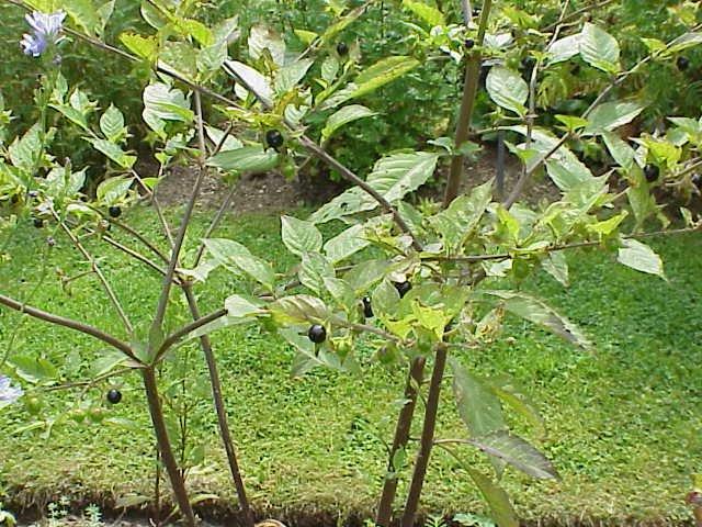 plant-10
