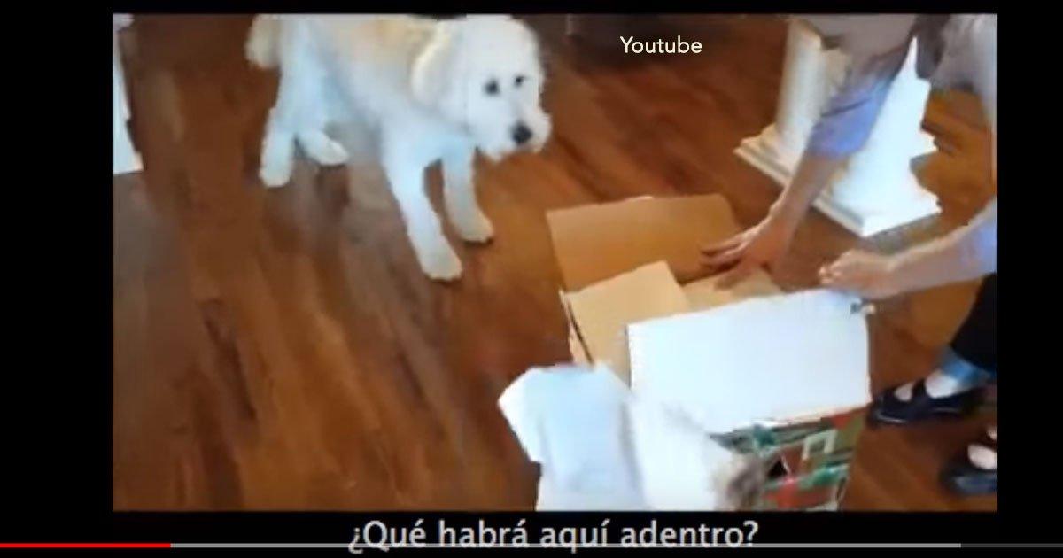 portada 40.jpg?resize=1200,630 - Increíble video de un perro de la familia que recibe de regalo una nueva mascota, su felicidad ha inundado de comentarios las redes
