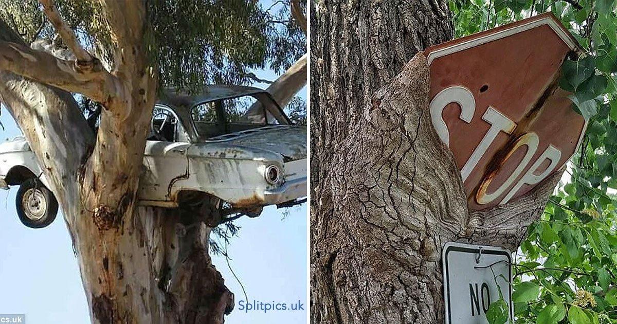 portada 45 - 30 imágenes difíciles de comprender de cosas atrapadas en árboles