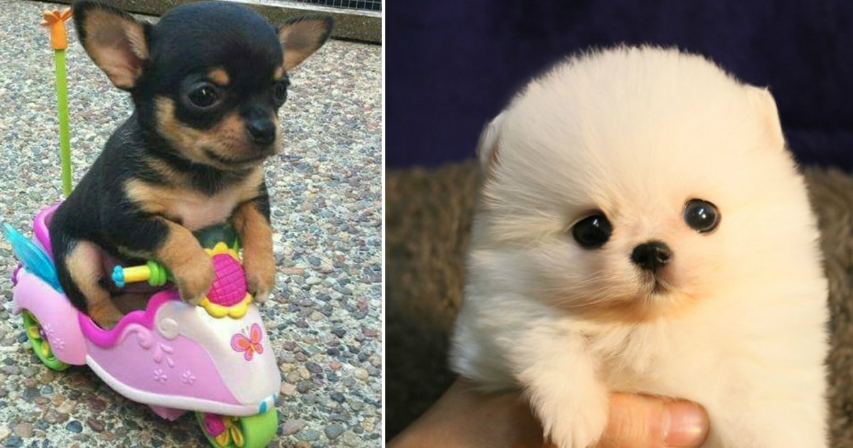 puppyfin.jpg?resize=412,232 - 20 fotos de cachorros pequenininhos. O que não tem de tamanho, tem de fofura