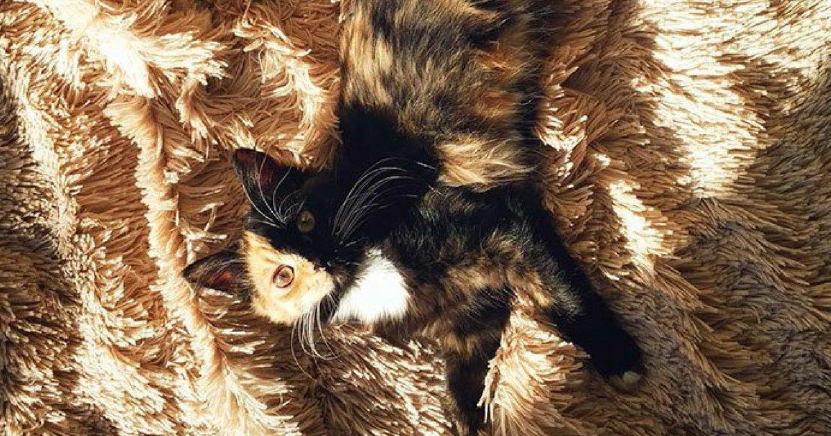 sans titre 4 2 - Découvrez le chaton qui affole le web !