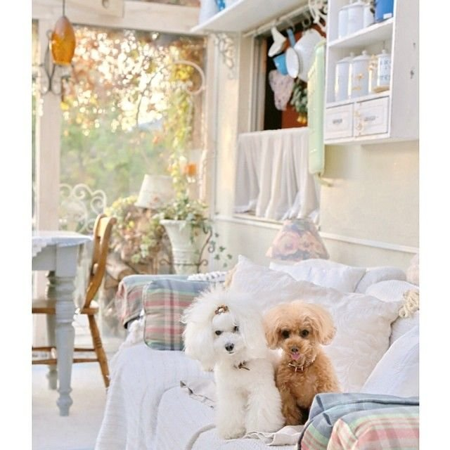 slider_27_-_the_japanese_toy_poodle_movement_that_s_revolutionizing_instagram