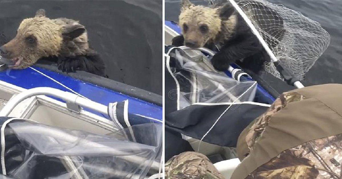 thumbnail8.png?resize=1200,630 - Pescadores resgatam dois ursos que se afogavam ao se separarem da mãe