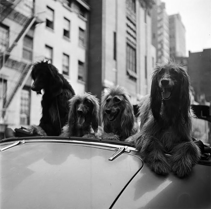 vintage-photographs-new-york-street-life-stanley-kubrick-8-59a94581034c2__700