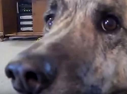Owner talks to dog about bacon