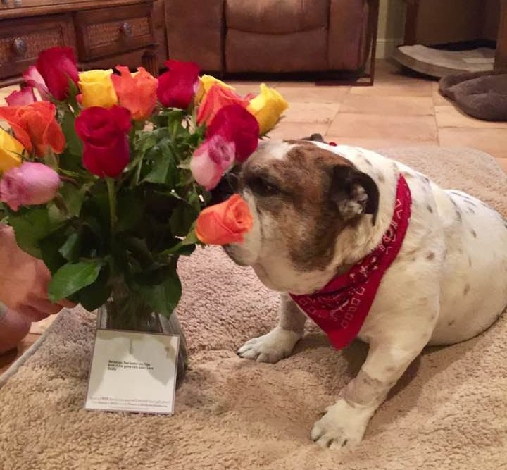 16426244 10212046778073846 6056394779616562368 n 1 e1514444094469 - Husband Sends Roses To Home, Later Wife Finds Out The Flowers Were Not For Her!