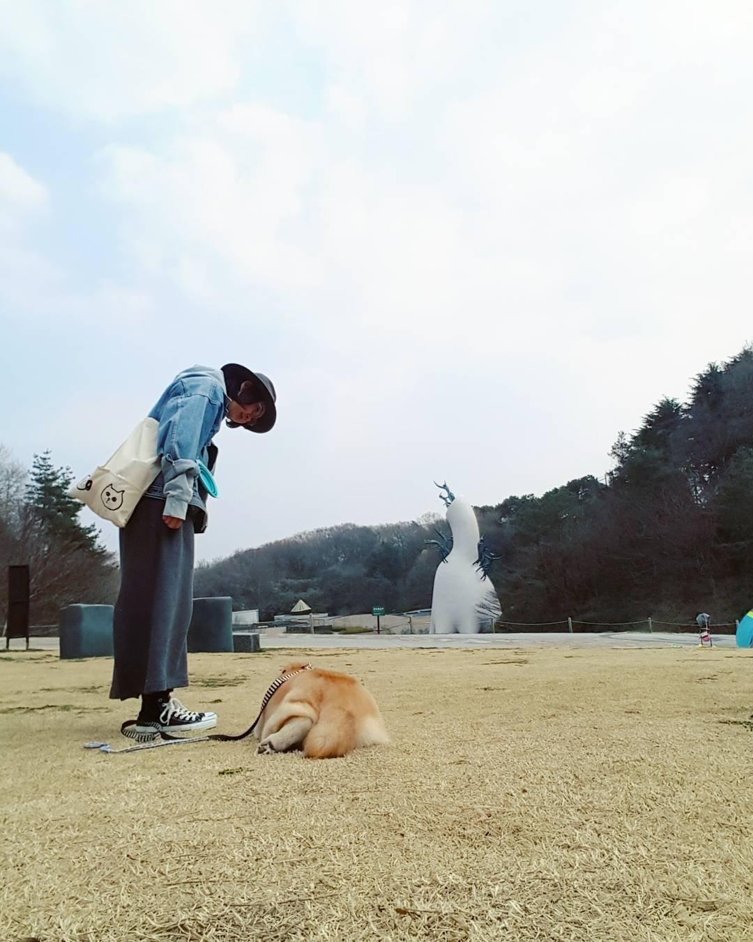 171202 112 - 誰家柴犬掉在路上啦?散步途中耍賴不肯動的日本超萌柴柴