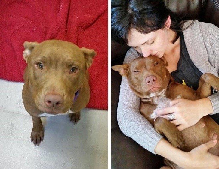 17344510 29652060 497881 16 0 1511211739 1511211742 650 1 1511211742 650 8e55e570af 1511939185 2 - 15 conmovedoras fotos de perros antes y después de ser adoptados, su vida cambió completamente.