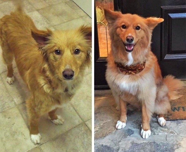 17344760 29646410 497881 11 0 1511211114 1511211123 650 1 1511211123 650 ba6afe94c3 1511939185 2 - 15 conmovedoras fotos de perros antes y después de ser adoptados, su vida cambió completamente.