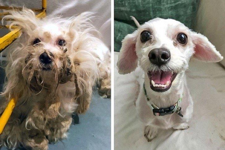 17345060 29643560 497881 4 0 1511209607 1511209642 650 1 1511209642 650 e783fcc182 1511939185 2 - 15 conmovedoras fotos de perros antes y después de ser adoptados, su vida cambió completamente.