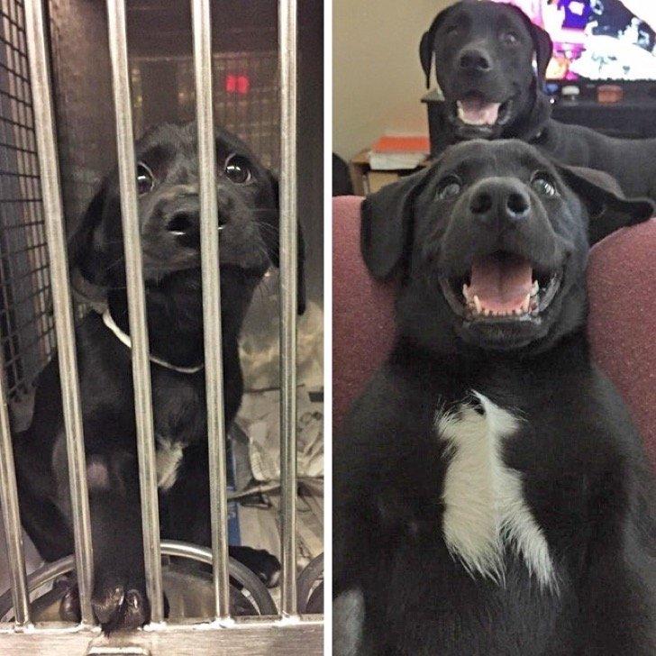 17345110 29643460 497881 3 0 1511209418 1511209425 650 1 1511209425 650 da55124ce6 1511939185 2 - 15 conmovedoras fotos de perros antes y después de ser adoptados, su vida cambió completamente.