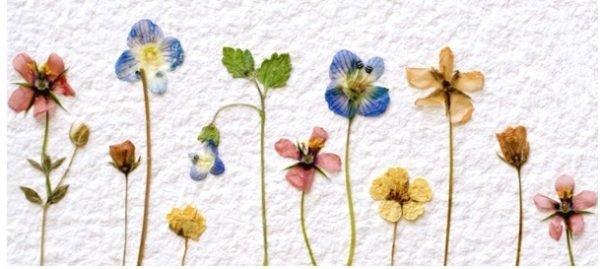 2012-04-flowers-pressed-e1493143480120