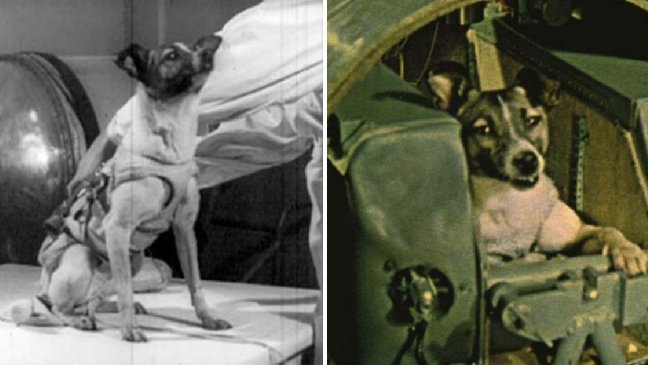 234q.jpg?resize=1200,630 - 衝擊性的真相!史上第一隻登入宇宙的狗,他的下場竟然...