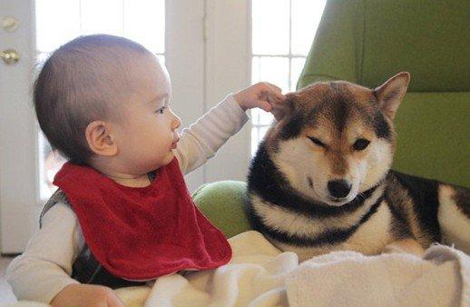 263 5.jpg?resize=1200,630 - 癒される!人間の赤ちゃんと動物のほっこりエピソードまとめ