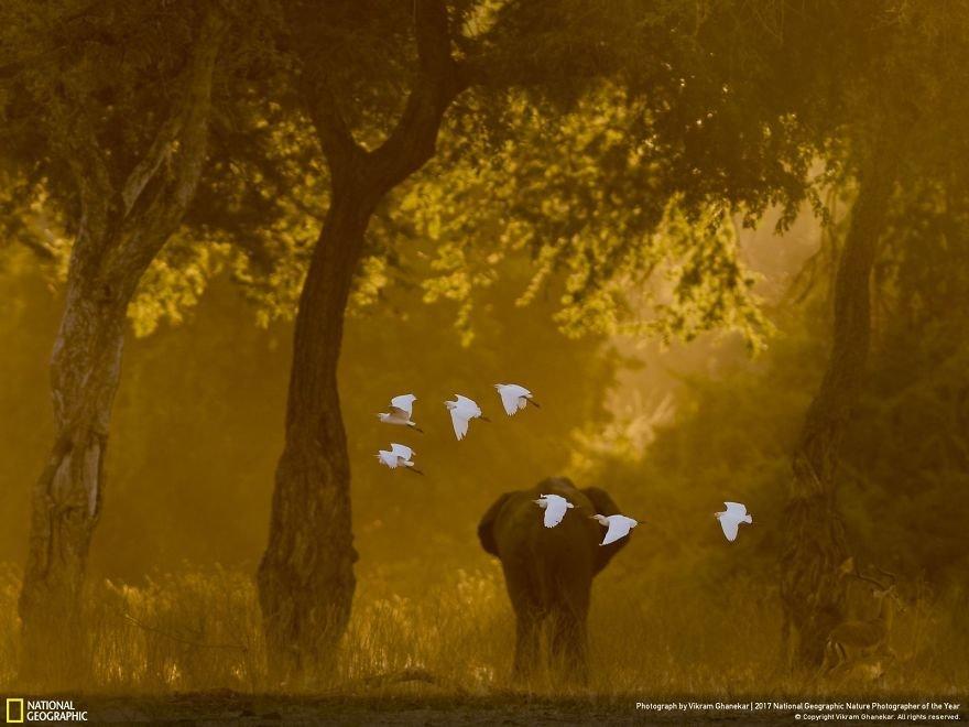 Crédits photo : National Geographic / Vikram Ghanekar