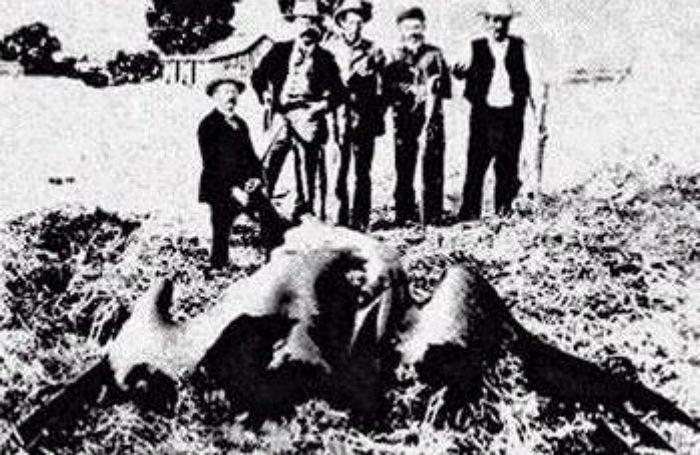 아르겐타비스 사냥 장면이라고 잘못 알려진 사진 / 온라인커뮤니티