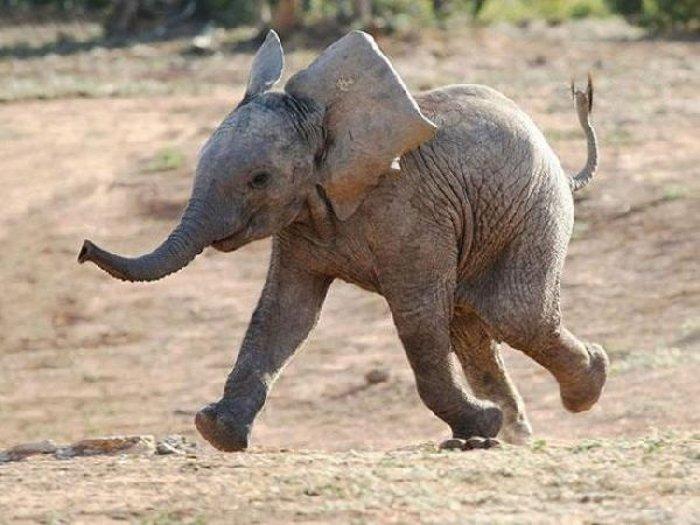 2410 - 20 fotografías de animales que muestran que son realmente increíbles