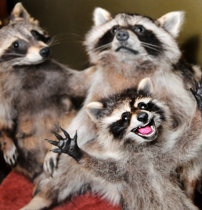 2610 - 20 fotografías de animales que muestran que son realmente increíbles