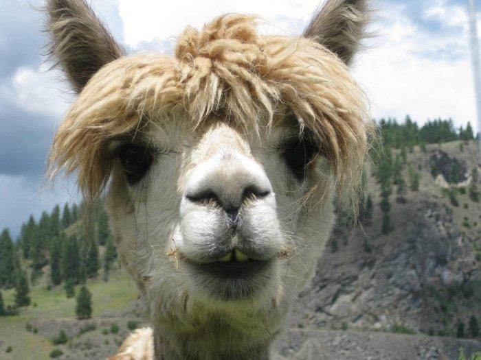 2810 - 20 fotografías de animales que muestran que son realmente increíbles