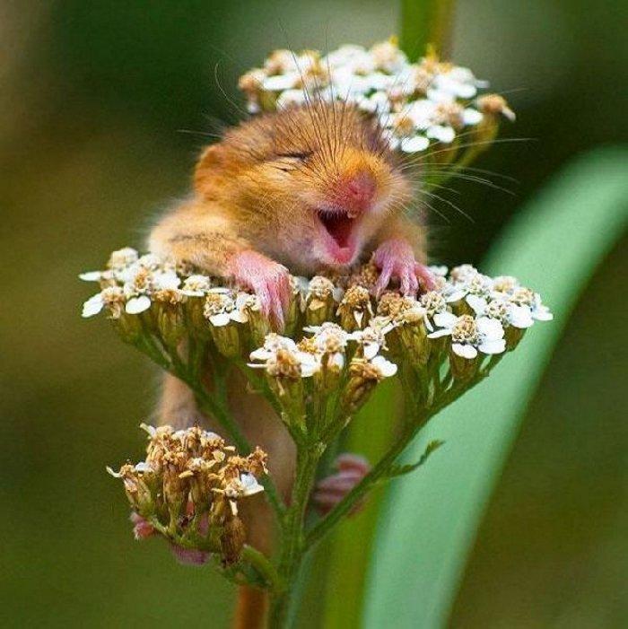 304 - 20 fotografías de animales que muestran que son realmente increíbles