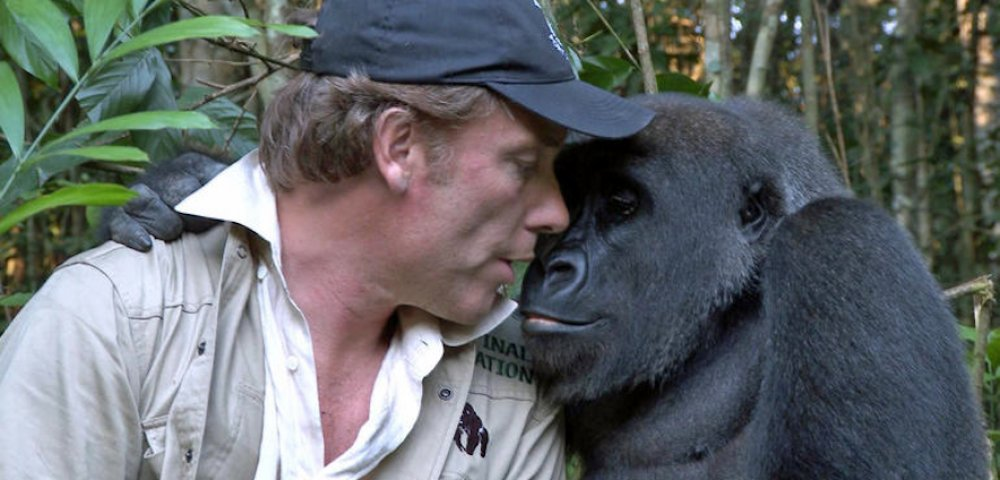 60 Minutes Aspinall gorilla  1000x480 - Man Visits Wild Gorillas He Raised As Babies, But Watch As He Introduces His Wife For First Time