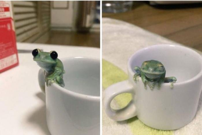 730 - 20 fotografías de animales que muestran que son realmente increíbles