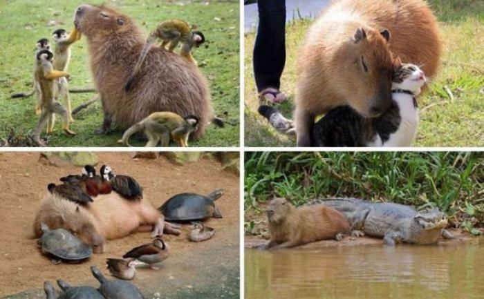 824 - 20 fotografías de animales que muestran que son realmente increíbles