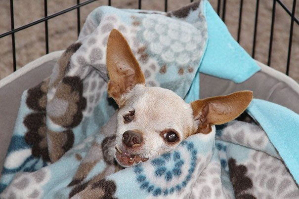 Oldest adopted dogs 46 57ab3cfa56a15  605 - 20+ Senior Dogs Adopted By Loving People With Huge Hearts
