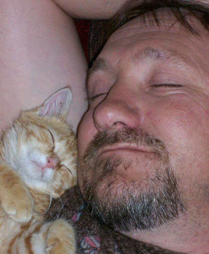 My Dad Swears He Hates Cats